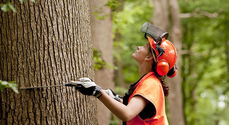 Berufe-Steckbrief: Forstwirt/Forstwirtin
